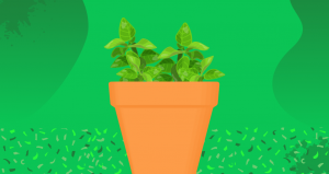 Keeping basil fresh from the supermarket: How to care for the kitchen herb properly